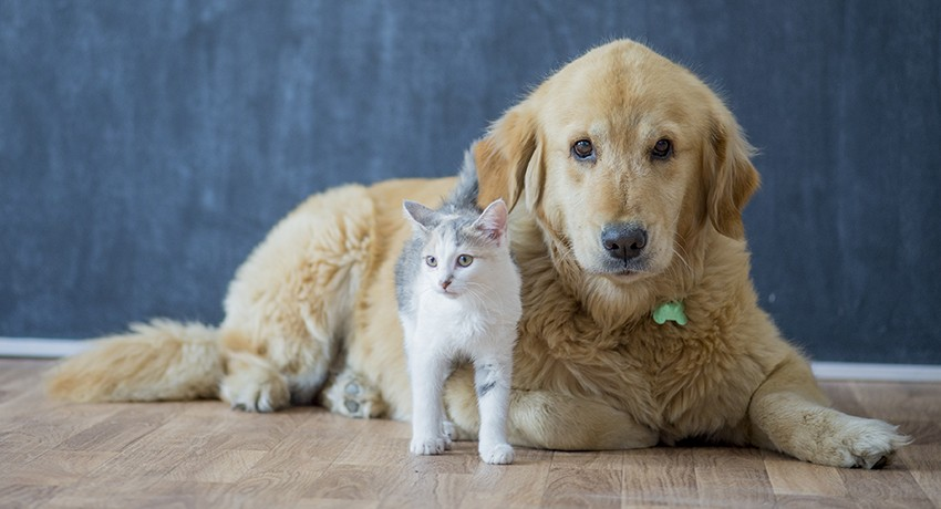 A cat and dog at home